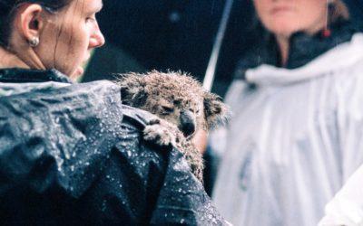 Law Focus – Animal Rights